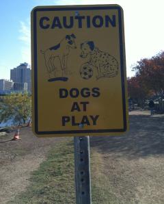 Canine levitation ahead
