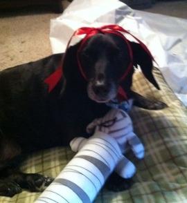 My houndish friend Chloe